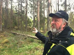 """""""Träd som har fallit lockar till sig granbarkborrar. Därefter kan de ge sig på träden i närheten, särskilt de som är försvagade, till exempel av torka"""