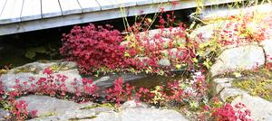 Vattnet som rinner på hällen leds bort under altanen och vidare via en ränna.En del blir kvar som en vacker vattenspegel.