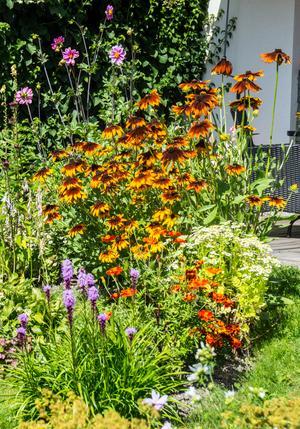 Konsten är att fylla rabatterna, säger Jan Bergman. Står de önskade plantorna tätt har ogräset inte en chans.
