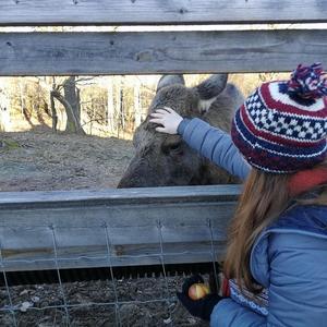 Vid ett besök vid en älgpark i Småland fick Alena närkontakt med skogens konung. Foto: Privat