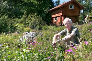 Naturtomten hos Kaj Widell på Väddö rymmer mängder av blommor. Nyfikenheten gjorde att han har inventerat sin tomt och hittills har hittat 83 olika blommor och buskar. – Charmen med naturtomten är att växterna kommer ganska utspritt under året. Vissa dyker upp på våren, andra på sommaren, sensommaren eller hösten. Missar jag en växt på våren så får jag vänta ett år till nästa tillfälle.