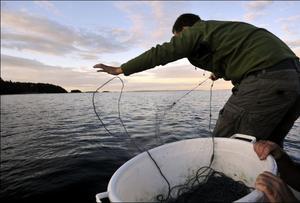 Det finns plats för alla yrkesfiskare, fritidsfiskare med nät och spö som önskar fiska och tillgången på fångst har alltid varierat och det till stor del beroende på väder och vindar, men till husbehov räcker det till, skriver insändarskribenterna.