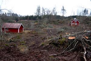 Debattörerna anklagar Sveriges regering och politiker för att gravt åsidosätta det svenska folkets önskan om ett anständigt skogsbruk.  Foto: Peter Lindgren/Proselva