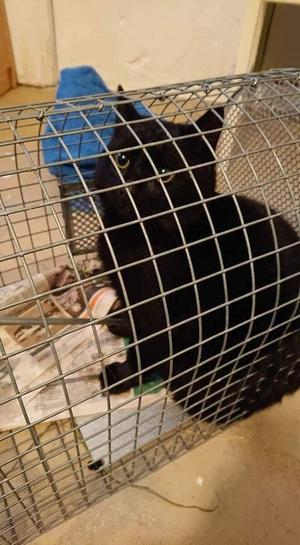 En av katterna som fångats in. Foto: Privat