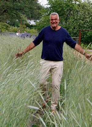 - Vad representerar en kvarn bättre än ett fält med råg, säger Ernst som rustar en kvarn i sommar.