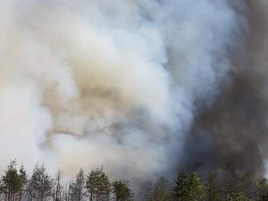 Det är kraftig rökutveckling från skogsbranden i Rörbo.