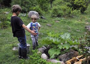 Barn odlar - en allt vanligare syn i framtiden? Här beundrar två bröder, 5 och 7 år, sin rabarberodling. Bild: Hasse Holmberg/Scanpix