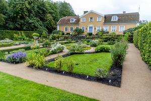 De botaniska trädgårdarna som Linné anlade tillkom i studiesyfte, inte för att bli turistmål som de är i dag. Bild: Adam Ihse/TT