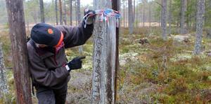 Olle Nordkvist studerar en nyupptäckt trädristning. Foto: Gunnar Hagelin