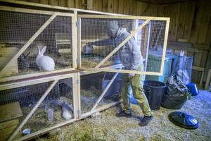 Familjen har skaffat höns, hästar och kaniner som Erik Wanneberg utfodrar.