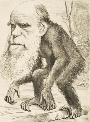 Charles Darwin utvecklade Buffons teori om människans släktskap med apan. Karikatyr i satirtidningen The Hornet 1871.
