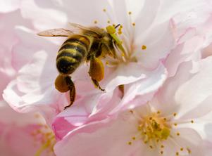 En miljon av åtta miljoner arter som lever på jorden hotas av utrotning, skriver insändarna. Insekter som bin och humlor är hotade.