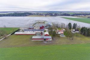 Foto: Johan Höwler Den som köper kan ta över svinstallar med plats för 3 500 svin.