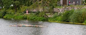 Cirka 1 300 ankor gjorde upp i Arboga ån.