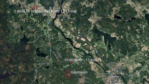 Det finns en känd vargstam vid Gåsmyren i Avesta kommun, på gränsen till Västmanland, som man tror ligger bakom en vargattack i maj då tio får dödades samt de senaste två dagarnas attacker.