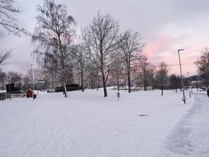 Öxnehaga på onsdagsmorgonen med en ljusrosa himmel. Foto: Nour G Abbas