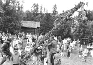 Innan danserna tar vid måste midsommarstången upp och under firandet i Åre 1984 hjälper både stora och små till med den saken. Fotograf okänd.