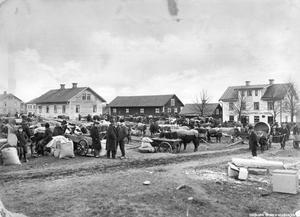 I början av 1900-talet var det häst som gällde. Här en bild från en kreatursmarknad i Odensbacken år 1908. Foto: Sam Lindskog/Örebro stadsarkiv.