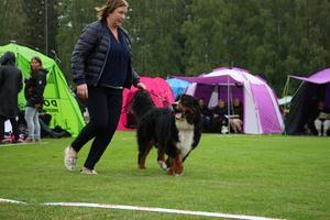 250 olika raser deltog på den nationella hundutställningen i Askersund.