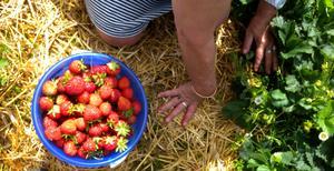 Självplock av frukt, bär, grönsaker och rotfrukter är ett annat tips från Länsförsäkringar.