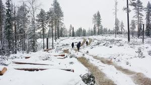 Så här såg det ut i vintras när personer från Fältbiologerna tältade i Oreskogarna och demonstrerde mot Sveaskogs avverkningar. (Foto: Fältbiologerna)