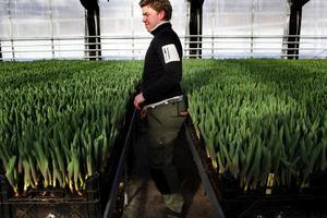 Andreas Nilsson tittar till de tulpaner som är på väg upp.
