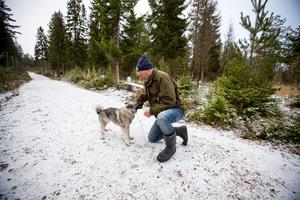 Per Dahl har sex gråhundar kvar efter att Jerven dödades under tisdagens jakt. Här är han med den ettåriga tiken Mi på träning i Älgparken i Ockelbo.