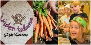 På odlingskooperativet Under tallarna växer mycket grönsaker som sedan äts på förskolor, av Johannes Svensson, Michelle Niclasson, Alice Östling, Lea Mineur och många andra barn.