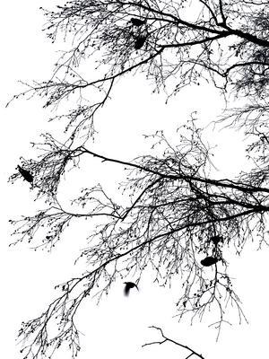 Foto: Nathalie Sainmaa. En vacker vinterbild från lilla Kolbäck. Bilden är inte i svartvit utan skuggan av träden gentemot den vita vinterhimlen gav bilden en svartvit effekt.