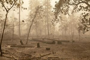 Från skogsbränderna i Oregon, USA. Många anser att de beror på klimatförändringarna.