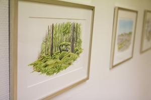 Jonas Lundins fina naturtrogna akvareller.