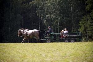 Hästtur. Besökarna kunde få en åktur med ardennerhästarna Molly och Milla.