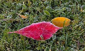 Man blir lika förundrad varje år över de fantastiska färger som finns i höstens löv. Foto: Liselotte Eriksson