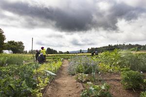 Odlingen ligger precis intill Orbaden spa och resort.