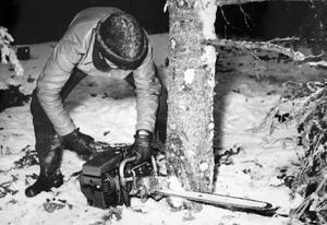 Trots att motorsågen underlättade vid trädfällning så var arbetsställningen inte skonsam för skogsarbetaren.