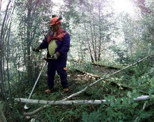 Nu ligger sly och buskar risigt till i Smedjebackens kommun. Röjsågsprojektet 2018 fick ett rejält gensvar från byalag och föreningar.