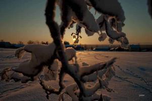 Bild tagen i Aspås en kall januari dag.Foto: Johan Östgren