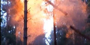Det blir en ordentlig smäll när vattenfalls entreprenörer spränger bort träd som hamnat över elledningarna under stormen Alfridas framfart.  Bild: Vattenfall