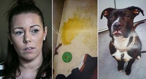 Fotomontage: Mikael Hellsten/polisen. Hundvalpen Marley stals från Karin Hindriks i augusti. Nu är han hittad – vanskött i en kolsvart lägenhet i Stockholm.