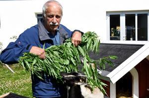 Arne Källman, vars fru bor på äldreboendet, är initiativtagare till killingarna.