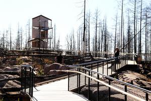 För första året är utsiktstornet på Grävlingsberget klart.