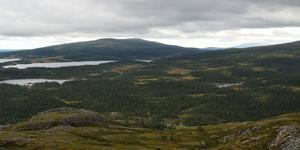 Nordväst om Ottsjö, i ett av de få områden i Europa som är klassificerade som Intact Forest Landscape. Bara några kilometer till vänster i bild finns flera hyggen och avverkningsanmälningar i fjällnära skog.