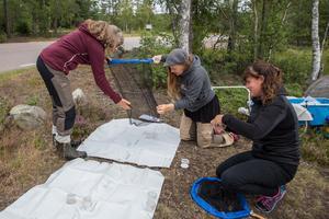 Gittan Matsson instruerar hur man fångar upp landdjur med håven.