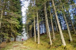 Sverige har en unik trefaldig bränsleresurs i skogen. Rester efter skogsbruket kan omvandlas till metanol som i sin tur kan användas till bränsle . Foto: Gorm Kallestad/TT