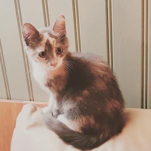 144) Gunsan 6 månader. Får ofta höra att hon är så fina så självklart är hon årets Lussekatt Foto: Lotta Joelsson