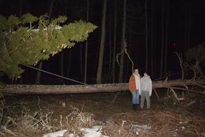 Det är becksvart i skogen bakom Pia Josefssons hus, med hjälp av bilens hellysen gick det ändå att ta en bild på träden som blåst över elledningen.