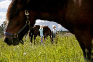 Det är sommarläger på Lägda gård och barnen som är där får prova hur det är att arbeta på en bondgård. Förutom att både träffa och rida på hästarna i hagen har de fått fylla på vatten i hagar, flytta kalvar och ta hand om nykläckta kycklingar.