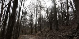 En vandring i skogen är aldrig fel under lovet. Foto: Johan Nilsson / TT
