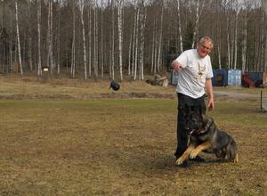 Dick Lindfors har tränat brukshundar sedan 1963. Här tillsammans med fyraårige schäferhanen Karuso.