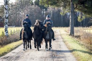 Mirjam rider Fluga, Anna rider Embla och Fjalar springer med som handhäst.